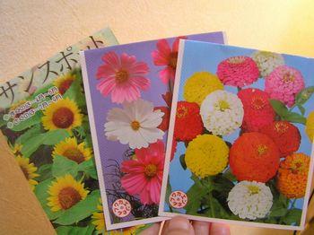 花の種.jpg